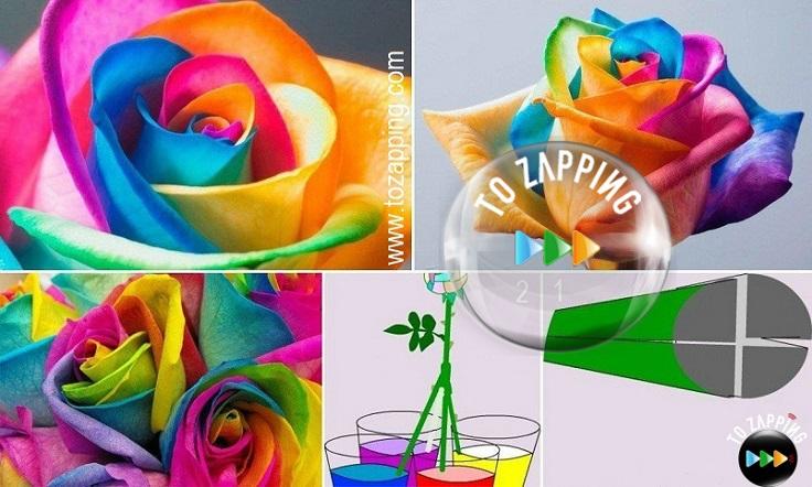Cómo hacer rainbow roses paso a paso