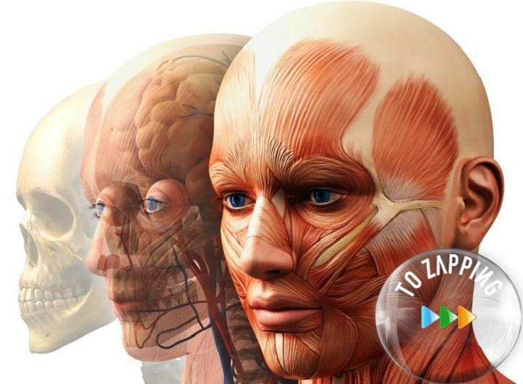Curiosidades de nuestra anatomía