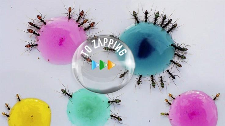Hormigas traslúcidas