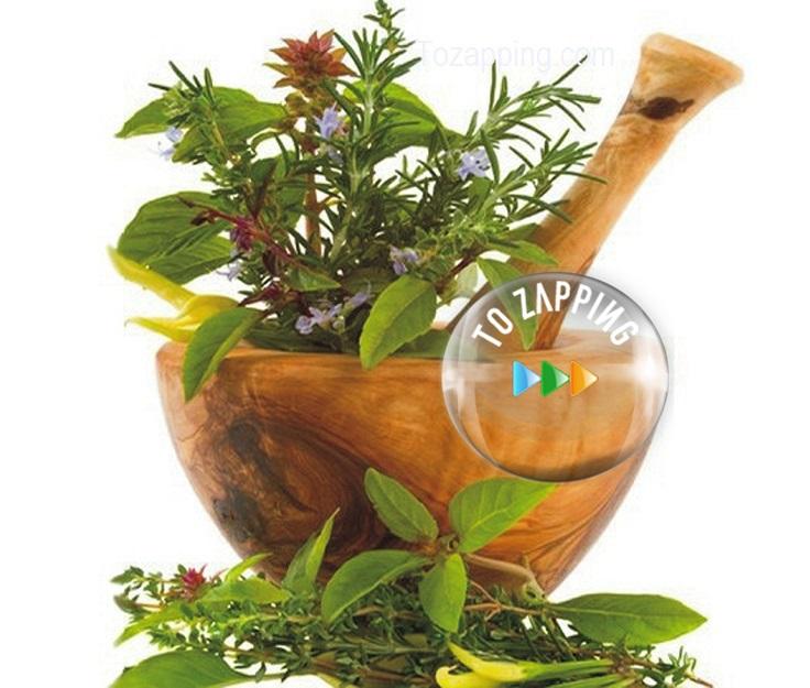 Plantas que adornan y aromatizan tu hogar