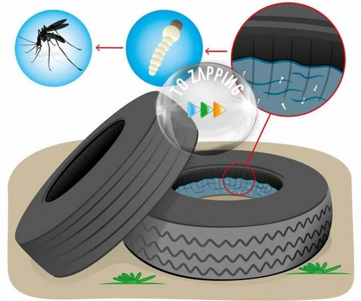 Cómo hacer un repelente de mosquitos casero