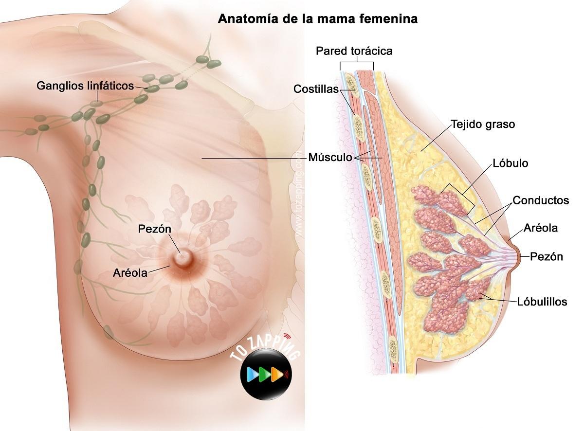 Exámenes de detección del cáncer de mama