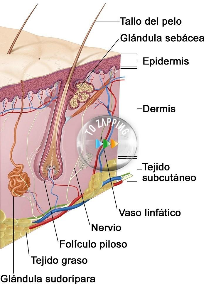 Remedios caseros para la grasa del cabello