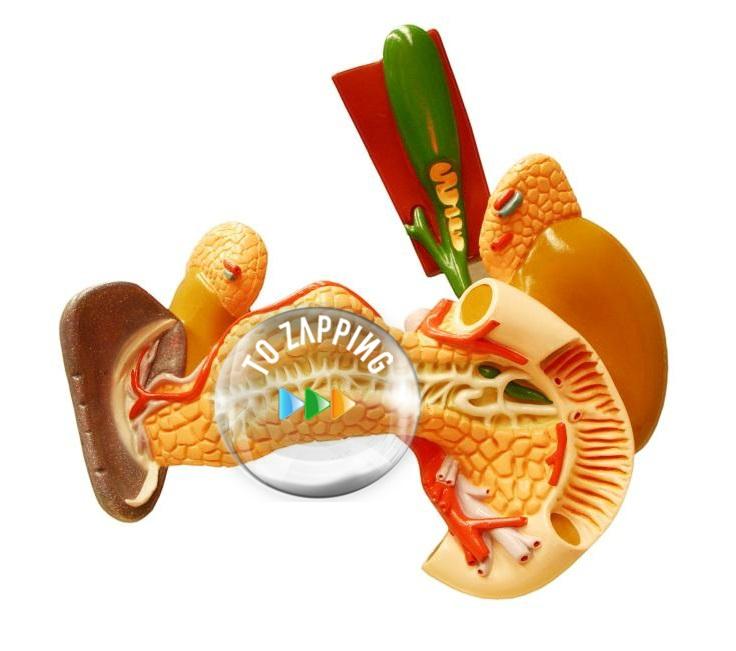 Remedio para aliviar la inflamación de la vesícula