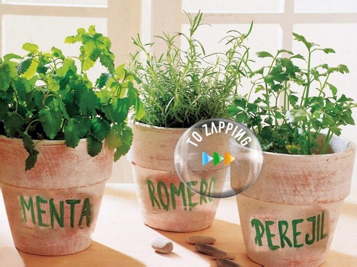 como plantar menta en casa